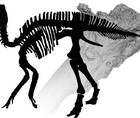 Ouch! Duck-Billed Dinosaur Had Arthritis in Its Elbow