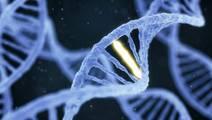 New Clues Found to Immune System's Misfiring in Autoimmune Diseases